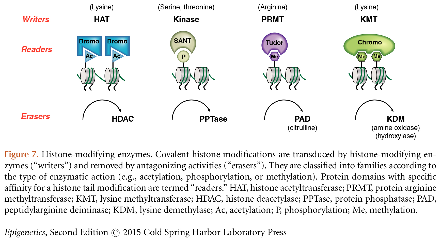 histone modification
